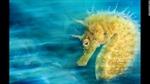 Những tuyệt phẩm dưới nước đạt giải năm 2016
