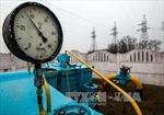 Tatneft và Gazprom ngừng cấp dầu cho Belarus