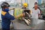 Hà Nội: Cơ bản khắc phục xong vụ cá chết hồ Hoàng Cầu
