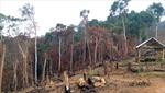 Vướng mắc trong quản lý đất lâm nghiệp tại Đắk Lắk