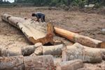 Kết luận vụ đất rừng An Khê biến thành đất sản xuất