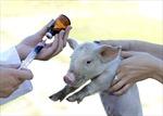 Nhờn kháng sinh - mối đe dọa đến từ nông trại