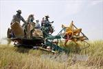 """Thái Lan lập các nông trại trồng lúa """"khủng"""""""