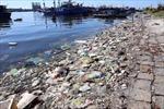 Khẩn trương xử lý ô nhiễm tại âu thuyền Thọ Quang