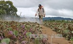 Lâm Đồng bảo đảm nguồn cung rau sạch