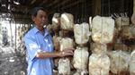 Trở thành triệu phú nhờ nghề trồng nấm