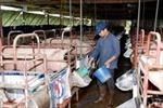 Sử dụng kháng sinh trong chăn nuôi còn bị buông lỏng