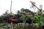 Xe tải chở hàng chục tấn gỗ lật ngửa trên ruộng