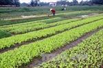Ưu tiên tạo đột phá cho nông nghiệp