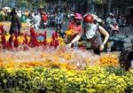 Hoa tươi, cây kiểng đại hạ giá ngày 30 Tết