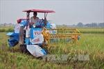 Tăng thu nhập nhờ xây dựng thương hiệu gạo sạch