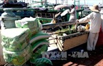 Phú Yên nạo vét khẩn cấp lạch Đông Tác