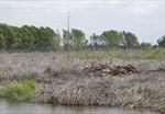 Khởi tố 2 bị can vụ đốn hạ trái phép hơn 25ha rừng đặc dụng ở Bến Tre