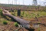 Khởi tố nguyên Đội trưởng Đội phòng chống khủng bố về tội 'hủy hoại rừng'