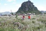 Quy hoạch xây dựng Công viên địa chất toàn cầu Cao nguyên đá Đồng Văn