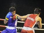 Khai mạc Giải Vô địch cúp các Câu lạc bộ boxing toàn quốc năm 2017