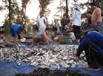 Nghệ An củng cố, phát triển nghề khai thác biển