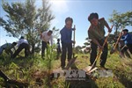 Lâm Đồng đẩy mạnh trồng rừng, trồng cây phân tán