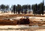 Thanh tra Chính phủ kiểm tra việc chuyển mục đích sử dụng rừng phòng hộ tại tỉnh Phú Yên