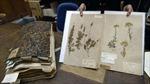 Tiêu bản 230 năm tuổi của Pháp bị hải quan Australia thiêu hủy