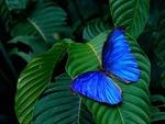 Đột phá công nghệ 'lọc ánh sáng' lấy cảm hứng từ những cánh bướm