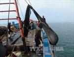 Tăng cường tuần tra, xử lý các tàu cá đánh bắt 'tận diệt' nguồn thủy hải sản ven bờ