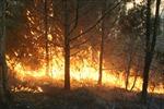 Hà Nội: Cháy rừng phòng hộ ở Sóc Sơn