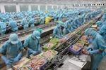Kiểm soát chặt cá tra xuất khẩu sang Hoa Kỳ kể từ ngày 1/9