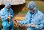 Năm 2018 sẽ có vắc xin cúm A/H5N1 cho gia cầm