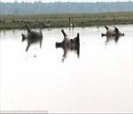 Bất thường: Hơn 100 con hà mã chết nổi lềnh phềnh trong công viên
