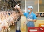 Chăn nuôi dư thừa nhưng xuất khẩu thịt vẫn là bài toán khó