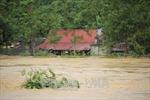 Phú Thọ: Hàng trăm ngôi nhà chìm trong nước do mưa lũ