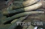 Khen thưởng thành tích khám phá nhanh vụ vận chuyển trái phép hơn 1,4 tấn ngà voi