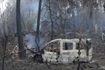 Thêm 36 người chết do cháy rừng tại Bồ Đào Nha và Tây Ban Nha