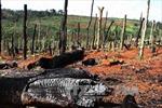 Chưa kiểm soát được tình trạng phá rừng trái phép ở Tây Nguyên