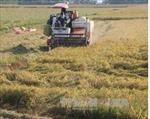Đồng Tháp bảo vệ đê bao chống lũ cho hơn 130.000 ha lúa Thu Đông