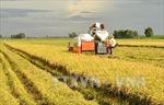 Đánh thức tiềm năng vùng Đồng Tháp Mười - Bài 2: Phát triển nông nghiệp bền vững