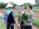 Phó Thủ tướng Vũ Đức Đam khảo sát mô hình trồng rau an toàn tại Hưng Yên