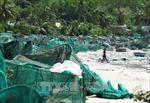 Vùng nuôi tôm hùm Phú Yên điêu đứng sau bão