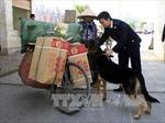 Ngăn chặn buôn lậu tuyến biên giới Lào Cai hoành hành cuối năm