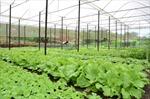 Đắk Nông ưu tiên phát triển nông nghiệp công nghệ cao với các cây trồng chủ lực