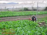 TP Hồ Chí Minh huy động mọi nguồn lực đẩy nhanh xây dựng nông thôn mới