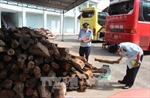Tây Ninh bắt giữ lô gỗ trắc nhập lậu trị giá trên 2 tỷ đồng