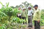 Các tỉnh Tây Nguyên chậm rà soát, điều chỉnh quy hoạch ba loại rừng
