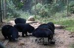 """Hơn 800 người tham gia sự kiện """"Chạy vì gấu - chấm dứt nuôi nhốt gấu"""""""