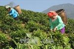 Vùng Tây Bắc vượt khó để tái cơ cấu ngành nông nghiệp