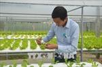 Làm giàu bằng hệ thống trồng rau thủy canh hồi lưu
