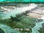 Phấn đấu kim ngạch xuất khẩu tôm tăng trưởng 10,79%/năm