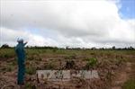 Đắk Nông ngăn chiếm dụng trái phép đất lâm nghiệp tại Đắk Ha