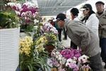 Hoa Đà Lạt loay hoay tìm hướng xuất khẩu